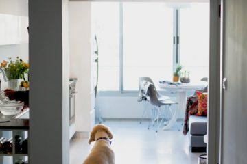 האם יש לך את 7 התכונות הדרושות לעיצוב הבית המושלם? (טיפ בונוס חשוב)